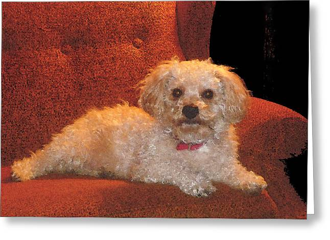 Greeting Card featuring the photograph Pampered Pooch  by Margie Avellino