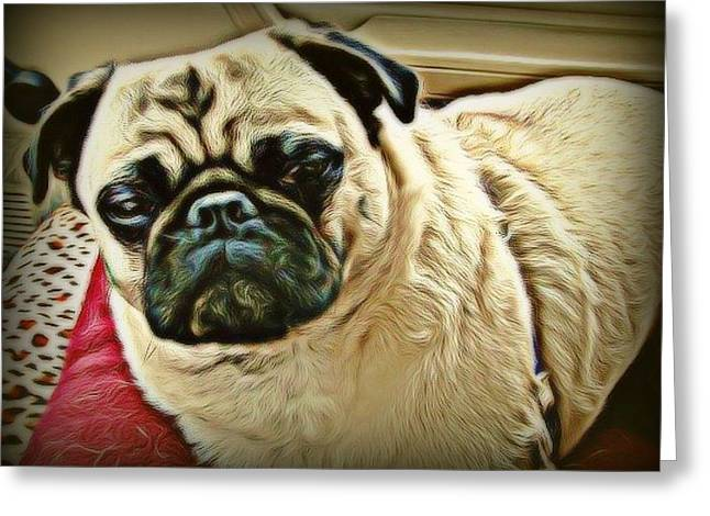 Pampered Pug Greeting Card
