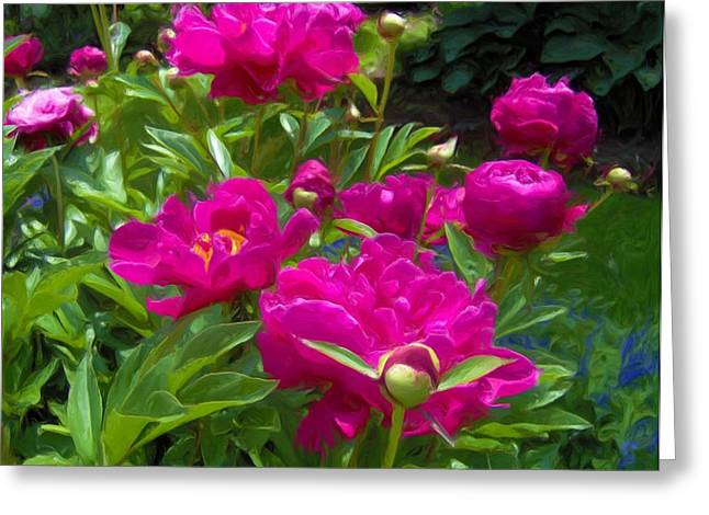 Pam's Perfect Peonies Greeting Card