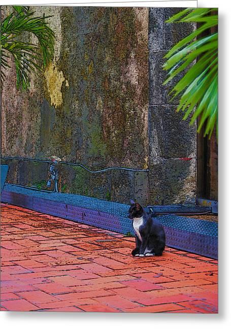 Panama Cat Greeting Card by Robert Boyette