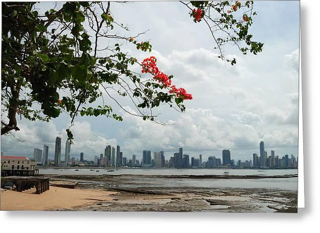 Panama City Downtown Greeting Card by Iris Greenwell