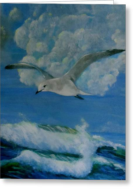 Panama City Seagull Greeting Card