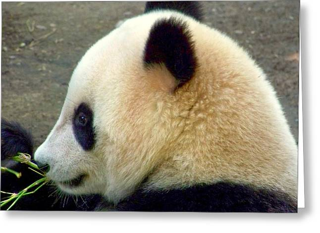 Panda Snack Greeting Card by Karen Wiles