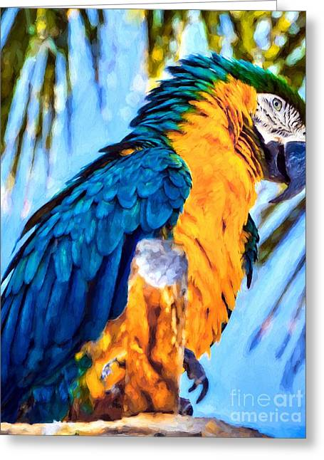 Panhandle Parrot Greeting Card by Mel Steinhauer