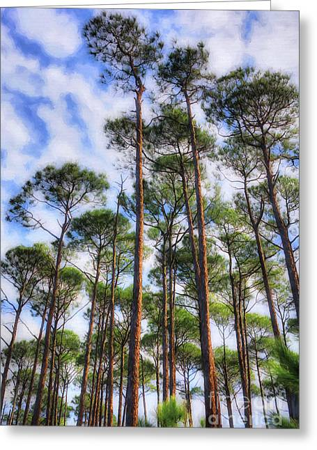 Panhandle Pines Greeting Card by Mel Steinhauer