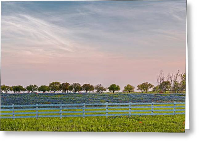 Panorama Of A Bluebonnet Field In Chappell Hill Washington County - Brenham Texas Greeting Card