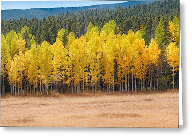 Panorama Of Aspen Grove Fall Foliage Peak To Peak Highway - Rocky Mountains Colorado State Greeting Card