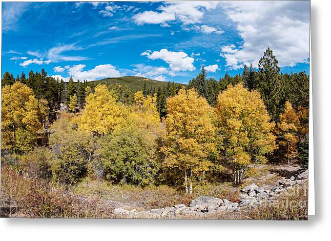 Panorama Of Fall Foliage Aspens In Colorado - Arapaho National Forest - Peak To Peak Highway Greeting Card