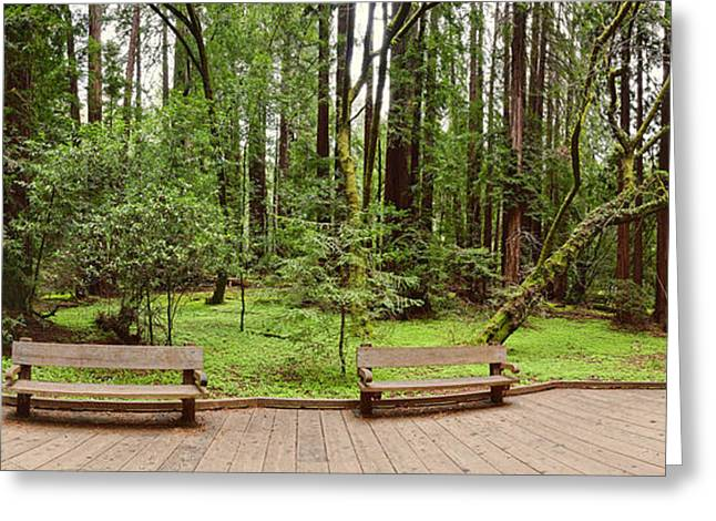 Panorama Of Muir Woods National Monument Boardwalk - Marin County California Greeting Card by Silvio Ligutti