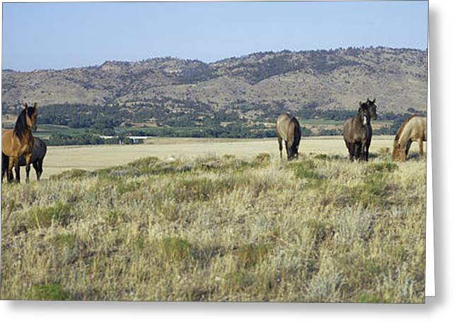 Panoramic Image Of Wild Horses Of Black Greeting Card by Panoramic Images