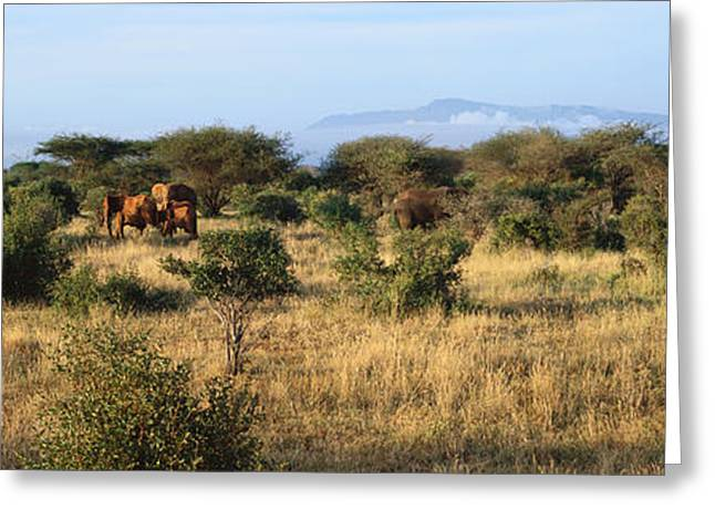 Panoramic View Of African Elephants Greeting Card by Panoramic Images