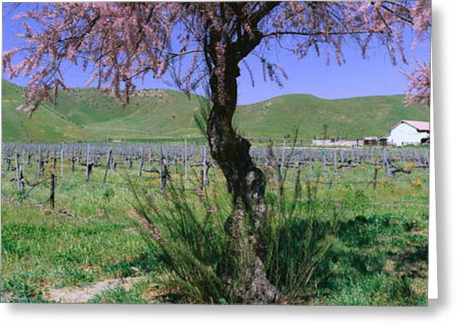 Panoramic View Of Golden California Greeting Card by Panoramic Images