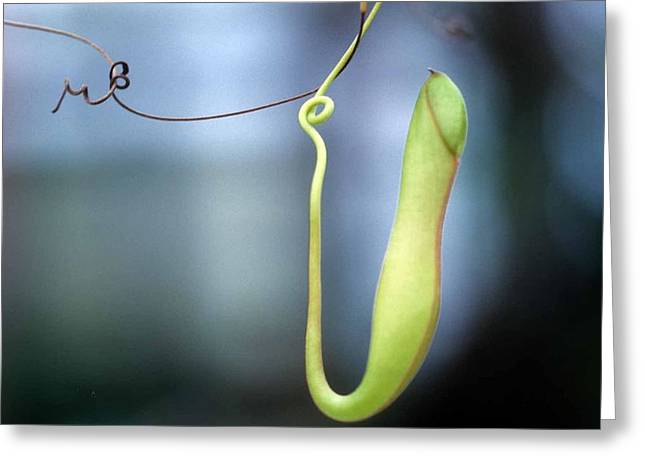 Pan's Green Flute Greeting Card by Laurie Paci