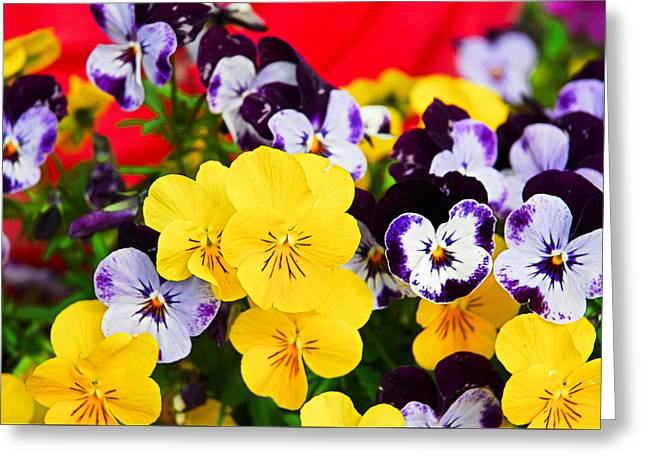 Pansies And Red Cart Greeting Card