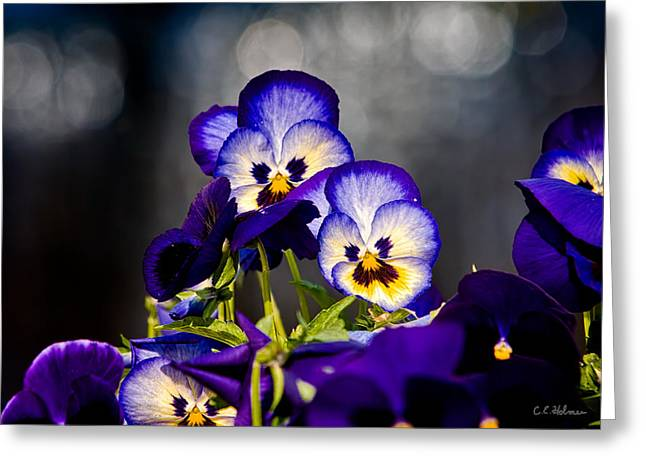 Pansies Greeting Card by Christopher Holmes