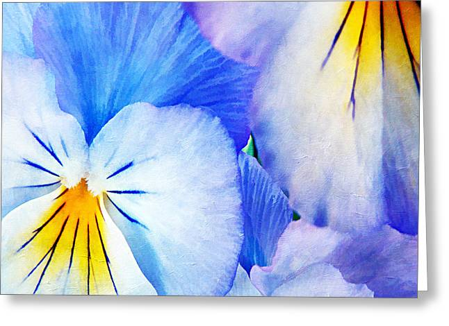 Pansies In Blue Tones Greeting Card