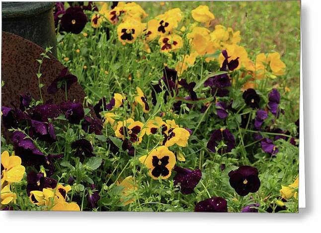 Greeting Card featuring the photograph Pansies by Kim Henderson