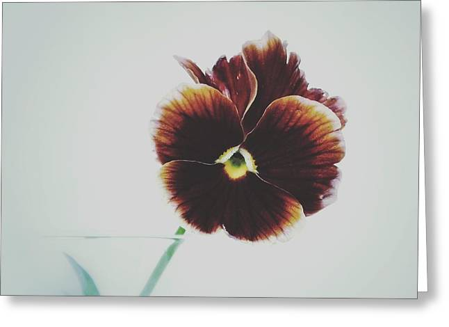 Pansy Face Greeting Card by Karen Stahlros