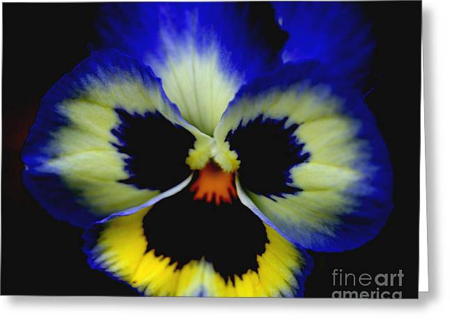 Pansy Face Greeting Card by Smilin Eyes  Treasures