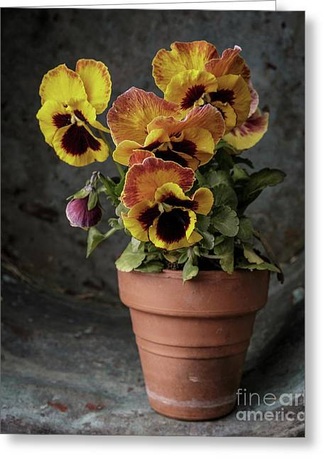 Pansy Flowers Greeting Card by Edward Fielding