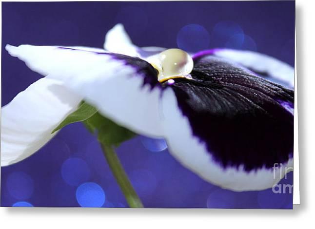 Pansy Jewel Greeting Card by Krissy Katsimbras