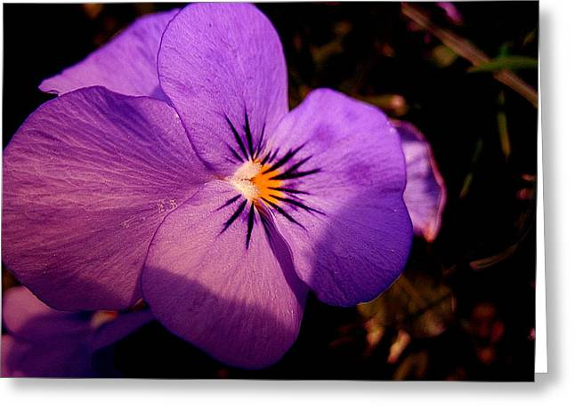 Pansy Greeting Card by Yannick Guerin