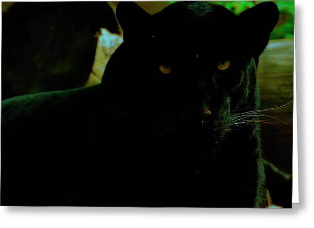 Greeting Card featuring the photograph Panther by Chris Flees