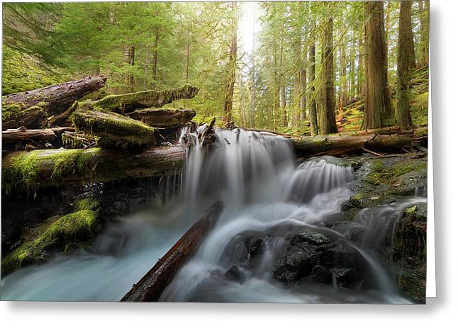 Panther Creek In Gifford Pinchot National Forest Greeting Card by David Gn