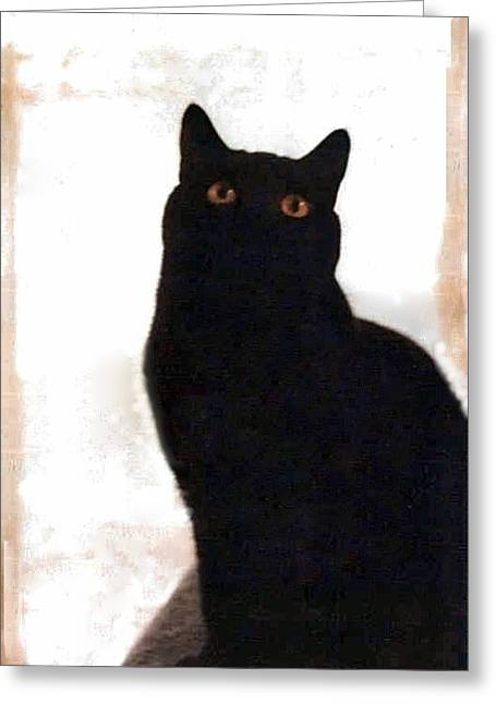 Panther The British Shorthair Cat Greeting Card