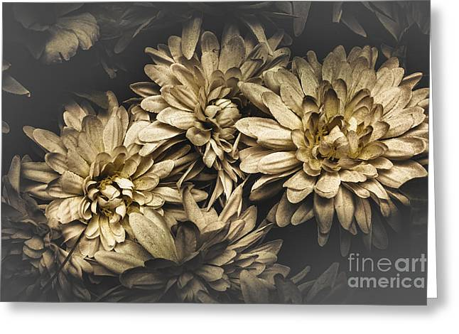 Paper Flowers Greeting Card by Jorgo Photography - Wall Art Gallery