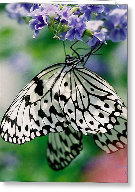 Greeting Card featuring the photograph Paper Rice Butterfly by Donna Brown