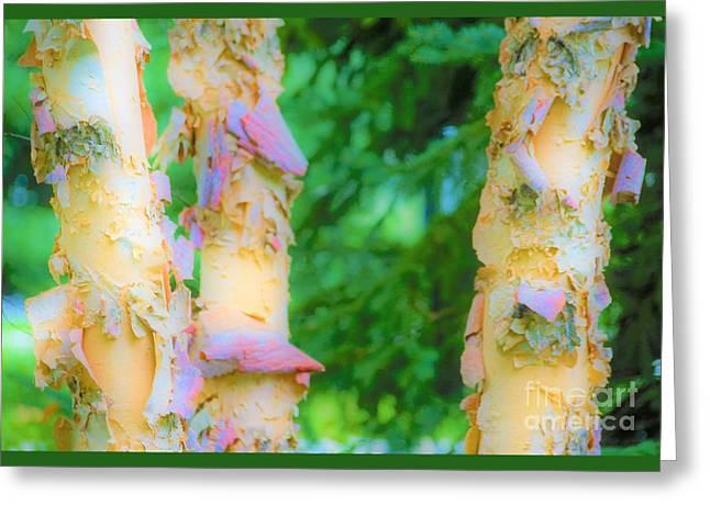 Paper Thin Bark Greeting Card