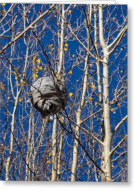 Paper Wasp Nest In Winter Greeting Card