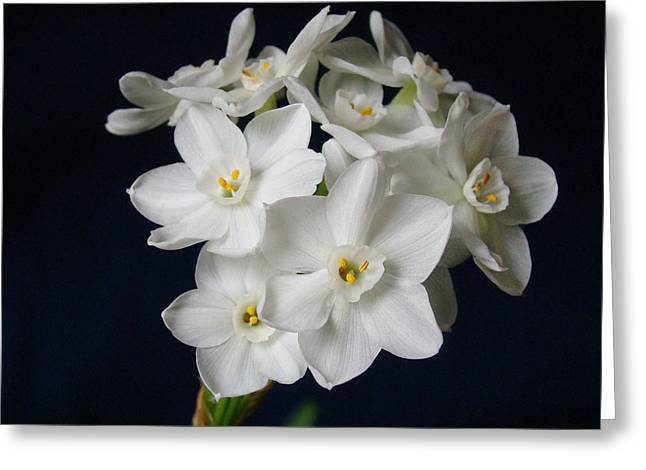 Sandy Keeton Photography Greeting Cards - Paperwhites Greeting Card by Sandy Keeton