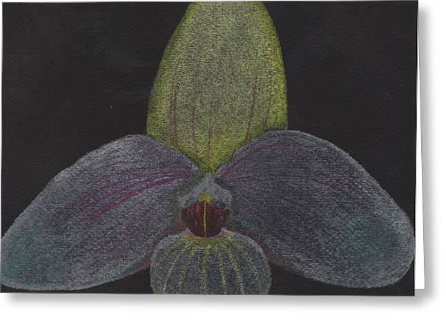 Paphiopedilum Mem. Orchid Greeting Card