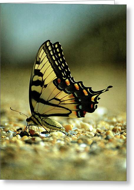 Papilio Glaucus Eastern Tiger Swallowtail Greeting Card by Rebecca Sherman