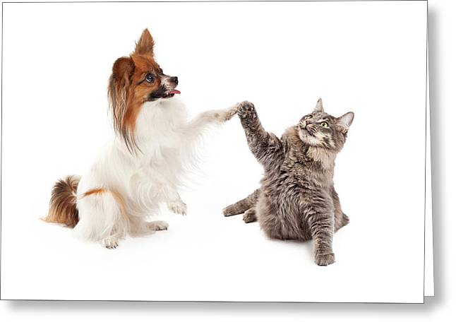 Papillon Dog And Cat High Five Greeting Card by Susan Schmitz