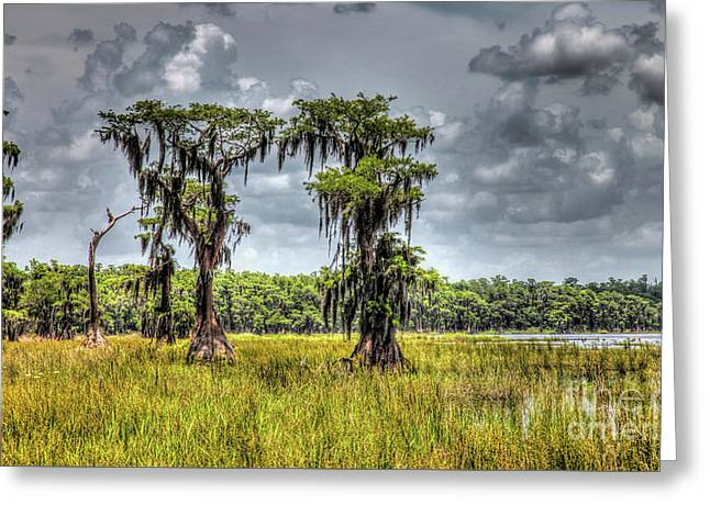 Parade Of Cypress Trees Greeting Card by Felix Lai