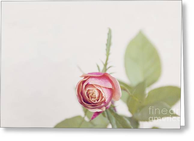 Greeting Card featuring the photograph Parade Rosebud by Cindy Garber Iverson