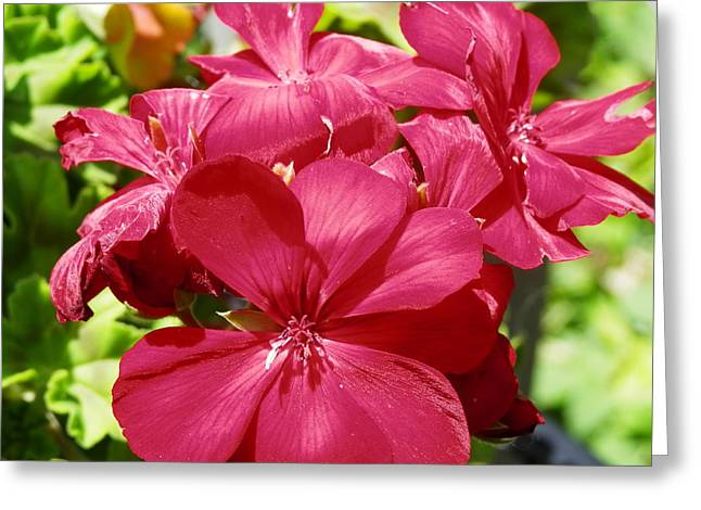 Paradise Bloom Greeting Card
