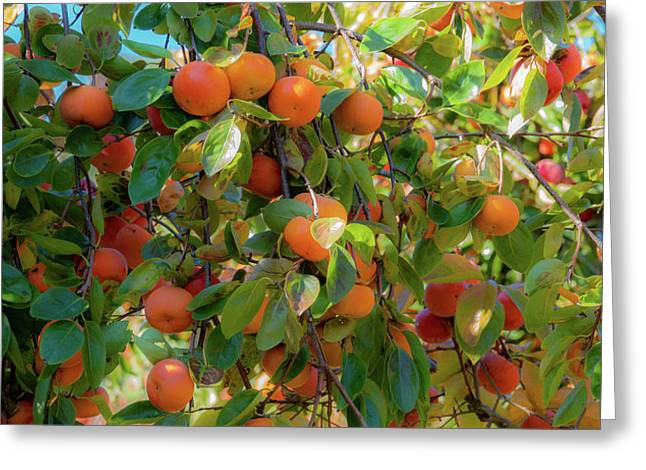 Paradise For Persimmons Greeting Card