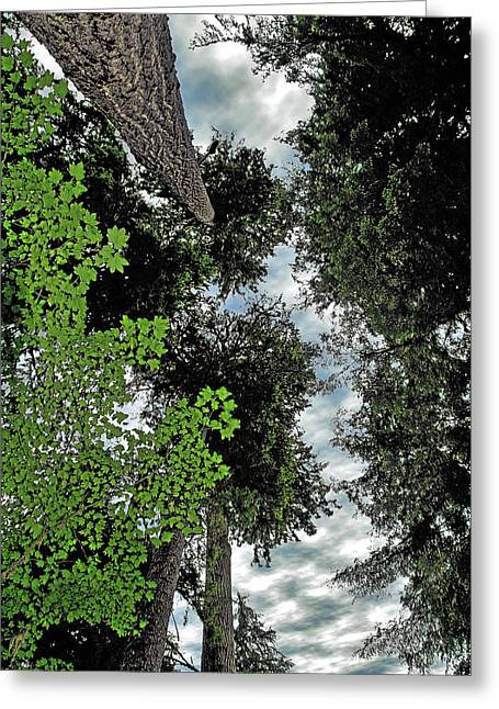 Onp Greeting Cards - Paradise to lovers of big trees - Olympic National Park WA Greeting Card by Christine Till
