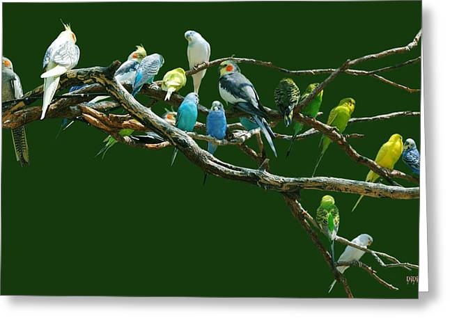 Parakeets N Cockatiels Greeting Card