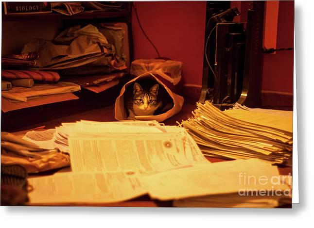 Parcel Cat Greeting Card by Venura Herath