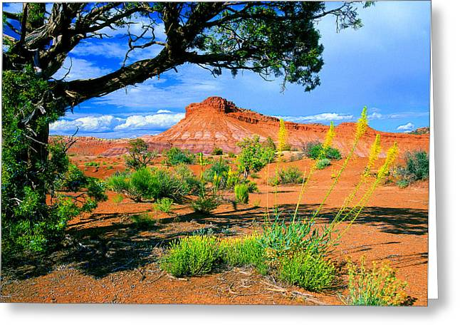 Paria Wilderness Greeting Card