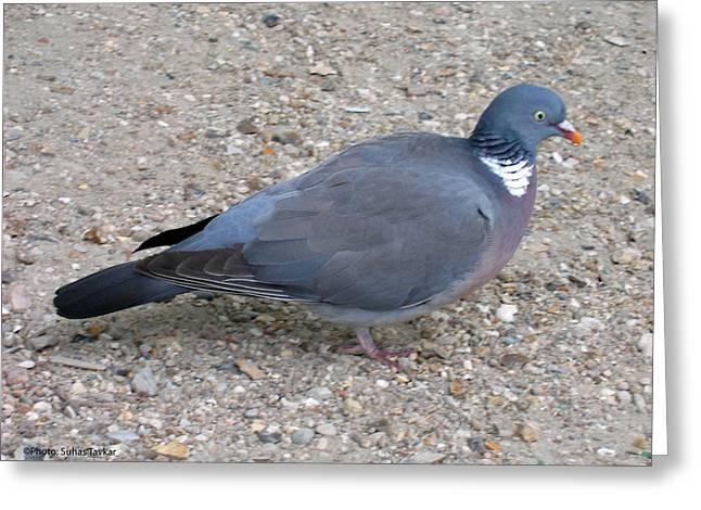 Paris Pigeon Greeting Card by Suhas Tavkar