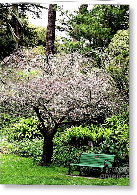 Park Bench At The Old Cherry Blossom Tree . 7d5804 Greeting Card by Wingsdomain Art and Photography