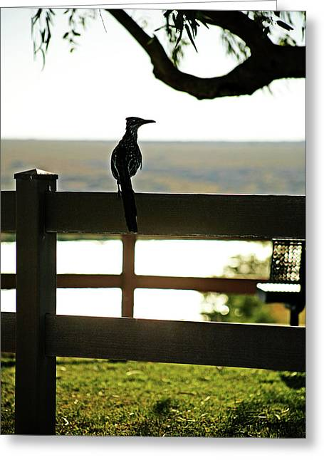 Park Roadrunner Greeting Card