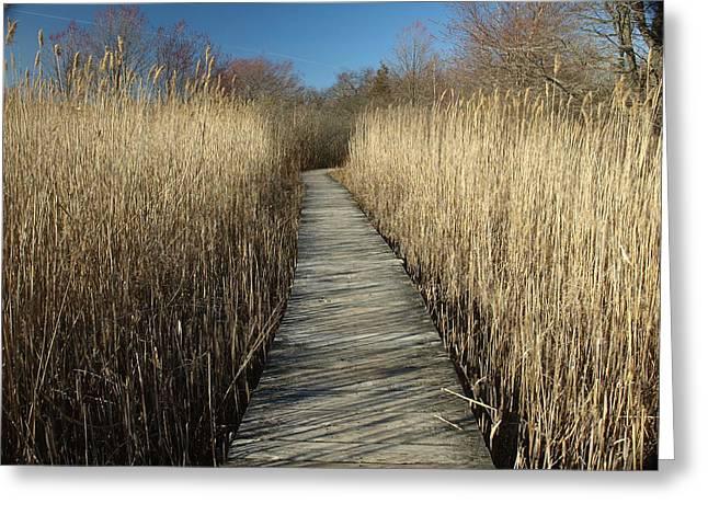 Parker River Wildlife Refuge Path Greeting Card