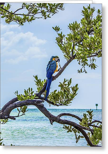 Greeting Card featuring the photograph Parrot Above The Aqua Sea by Paula Porterfield-Izzo